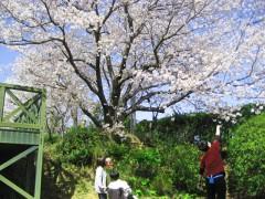 桜とひと。
