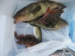 いろんな魚が釣れました